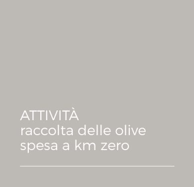 ATTIVITA' - raccolta delle olive - spesa a km zero
